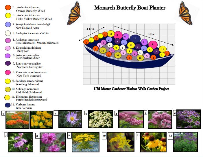 Blog_MonarchButterfly