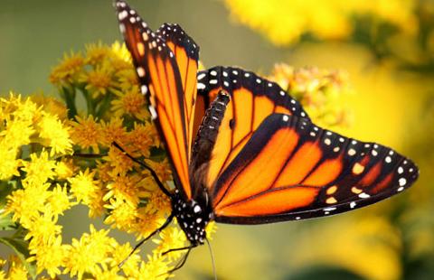 2016_MonarchButterflyHabitatPlanting